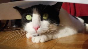 40-cat-quotes-that-are-brutally-true