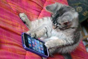 cat-using-iphone-300x200