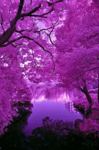 Purple Pond